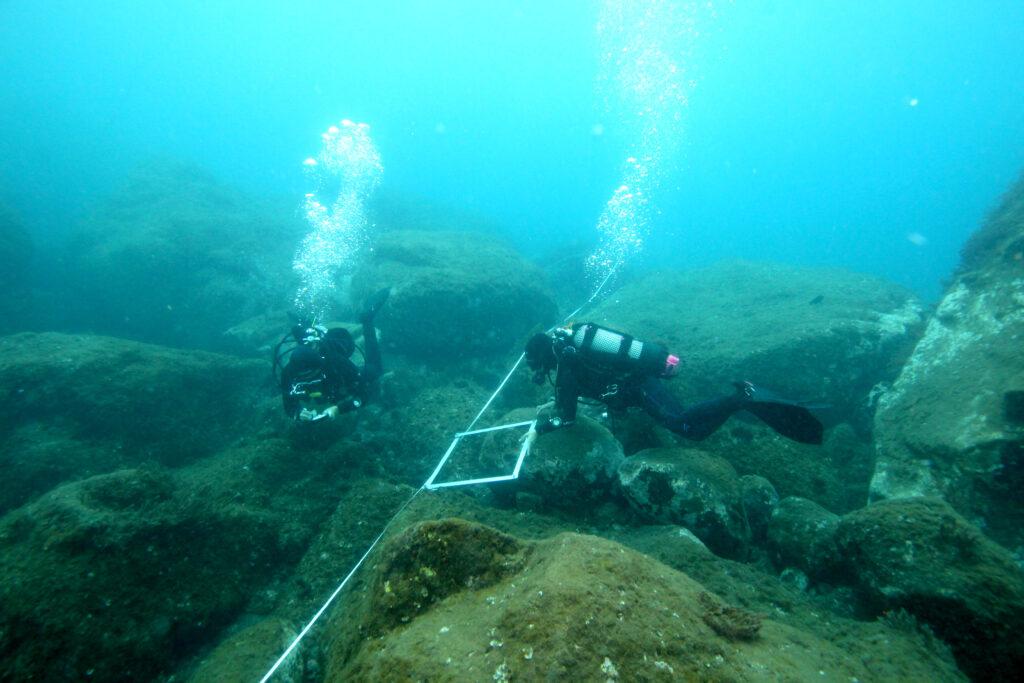 Dive LZR015: photoquadrat and visual census, 50 m. transect at 7 m. depth