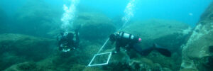 Quadrat on the transect and two divers